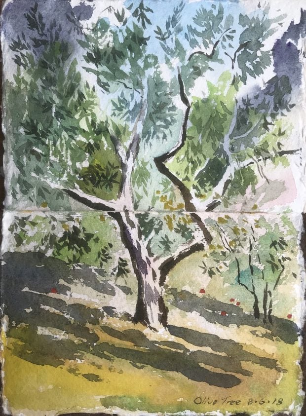 Painting an Olive Tree
