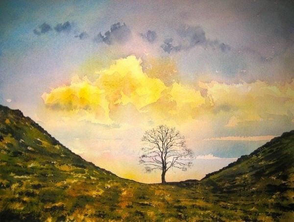 Tree, Hadrians Wall.JPG