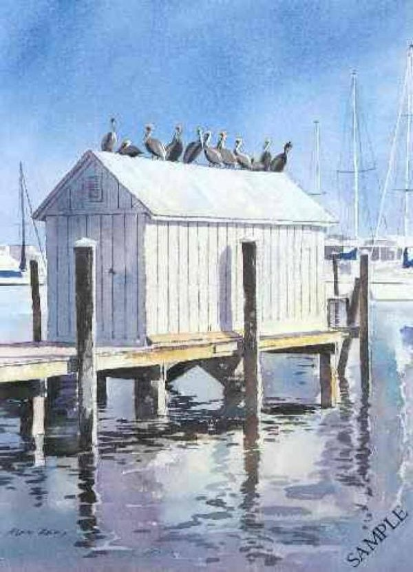Waiting for lunch, Pelicans, Florida.jpeg